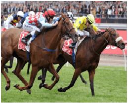 Dunaden Winner 2011